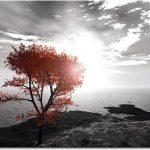 Fototapeta pomarańczowe drzewo