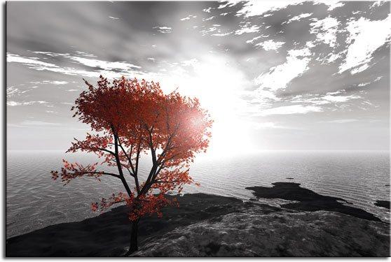 fototapety ścienne drzewo