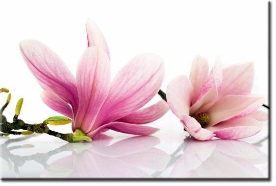fototapety różowe kwiaty