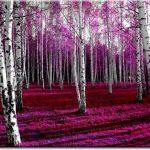 las brzozowy obraz