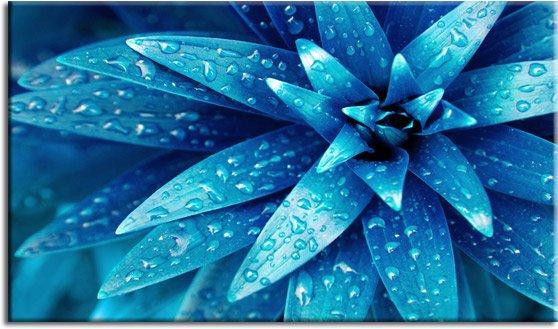 kwiat obraz