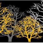 drzew obraz