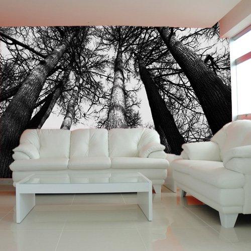 drzewa fototapeta