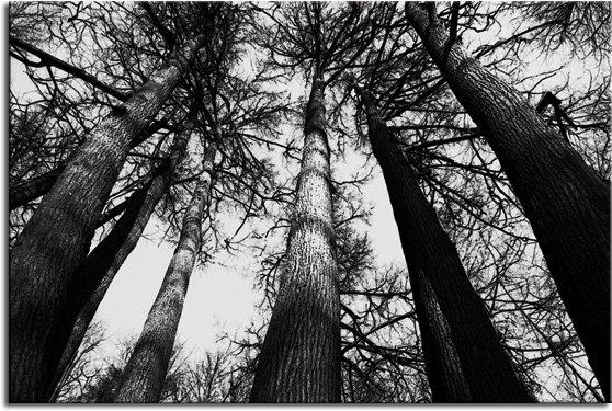 tapeta drzewa