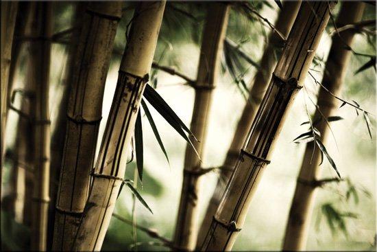 wzór bambusa