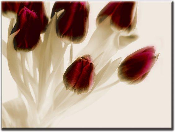 motyw tulipanów