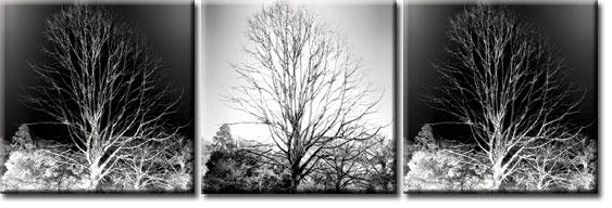 obraz z motywem lasu