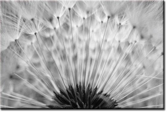 foto-tapeta z nasionami