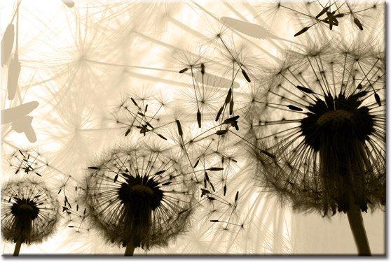 tapeta dmuchawce rozwiane przez wiatr