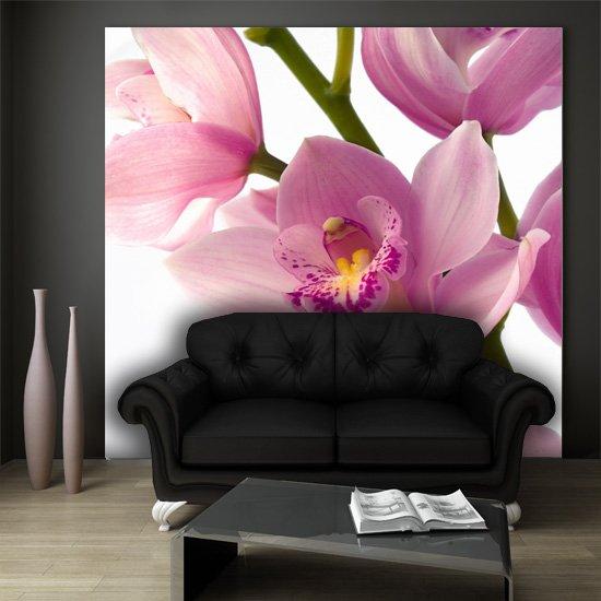 fototapeta orchidea