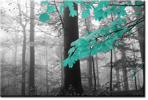 obrazy z drzewami
