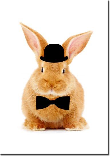 plakaty z króliczkami