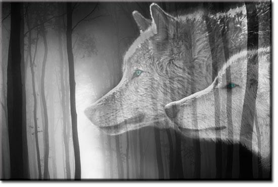 obrazy z wilkami na tle lasu
