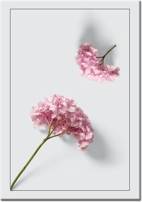 Plakat hortensja