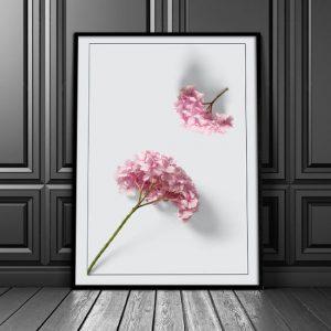 Plakat z hortensją