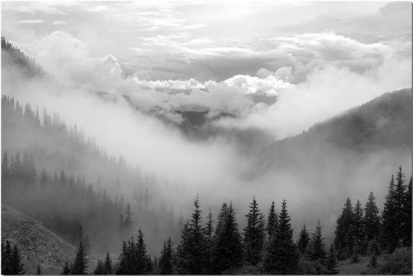 obraz z drzewami i chmurami