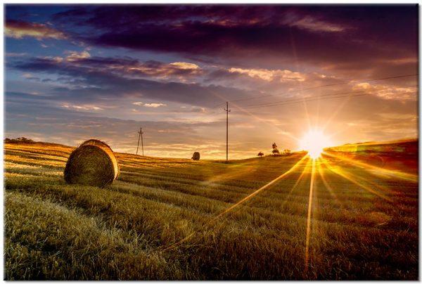 pole i zachód słońca na obrazie