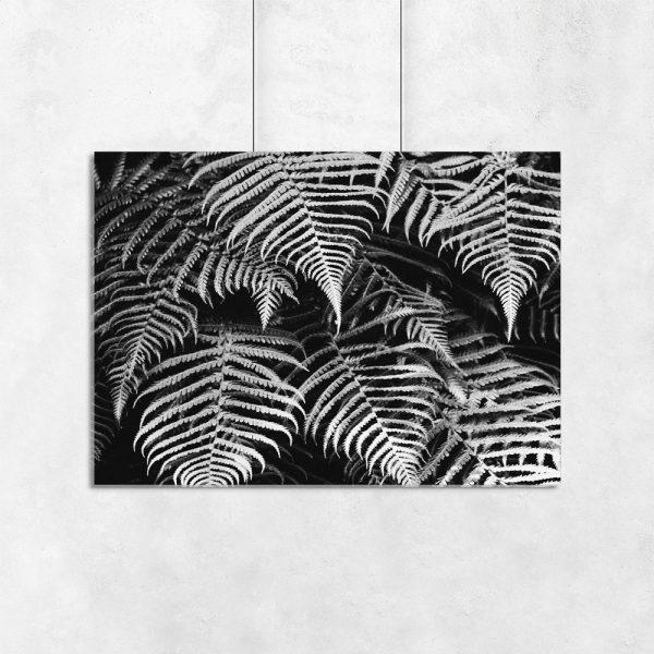 plakat z rośliną