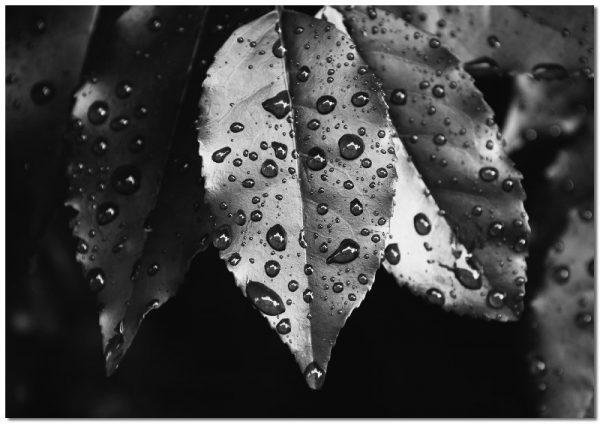 obraz poziomy na liściach