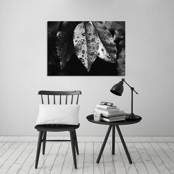 obraz czarno-biały z liśćmi