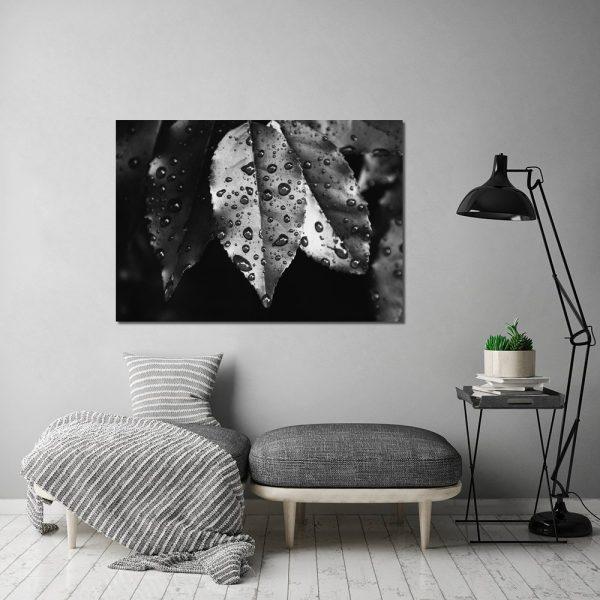 czarno-białe liście z kroplami