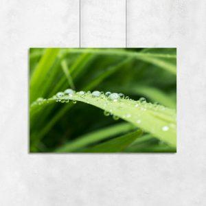 woda z trawą na plakacie