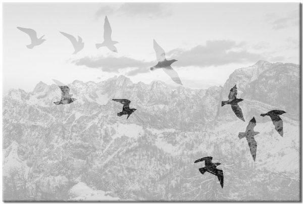 czarno-biały obraz