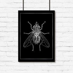 plakat z muchą srebrną