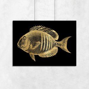 plakat ze złotą rybką