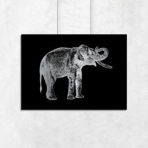 słoń na plakacie
