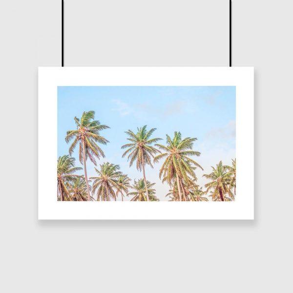 Plakat niebo i palmy