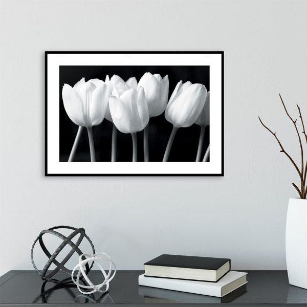 Plakat białe tulipany