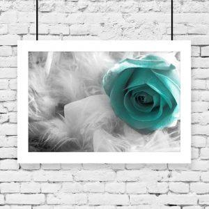 Plakat piórka i turkusowa róża