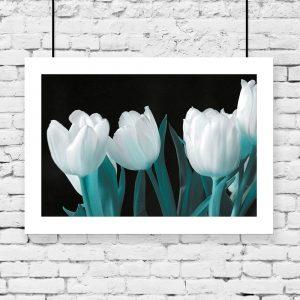 plakat z białymi tulipanami