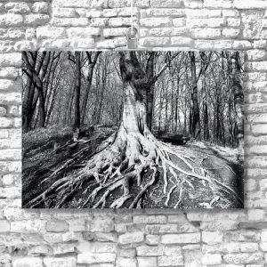 plakat z korzeniami drzew na ścianę