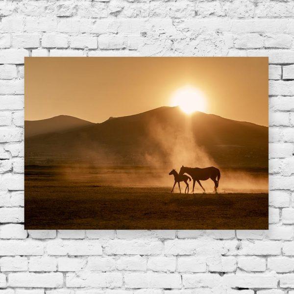 Obraz konie i pustynia