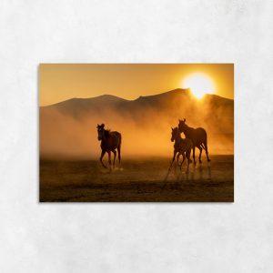 Obraz konie na pustyni