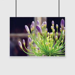 plakat z motywem kwiatowym na ścianę