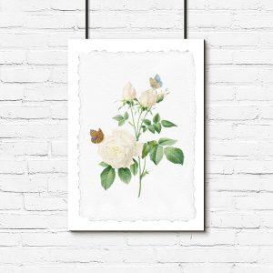 plakat róża motyle kwiaty