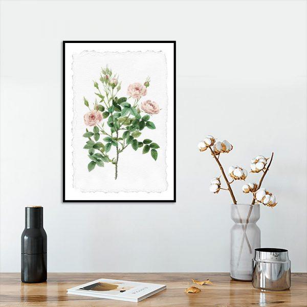 plakat z motywem rózy
