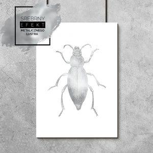 metaliczny plakat insekt