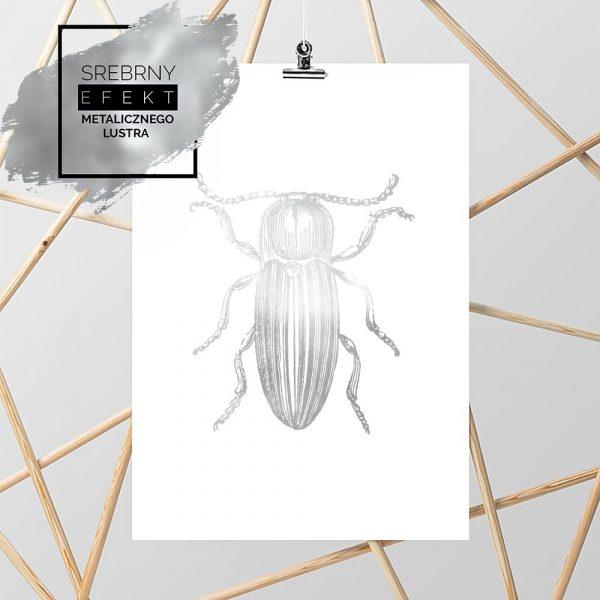 plakat metaliczny z żukiem