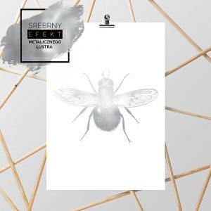 metaliczny plakat mucha
