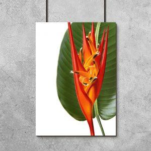 pomarańczowo-zielony plakat