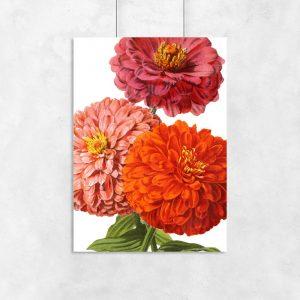 czerwone kwiaty na plakacie