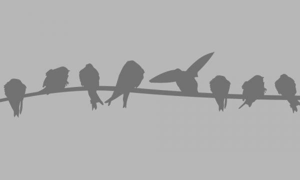 firanka samoprzylepna z ptasim motywem