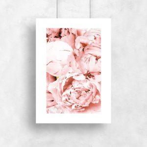 plakat przedstawiający różowe piwonie